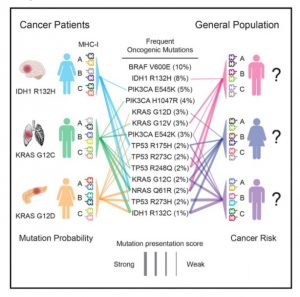 MHC-I genotype is associated with the appearance of specific oncogenic mutations, and recurrent oncogenic mutations are biased toward poorly presented peptides. Marty et al. (2017). Cell, 171(6):1272-1283.